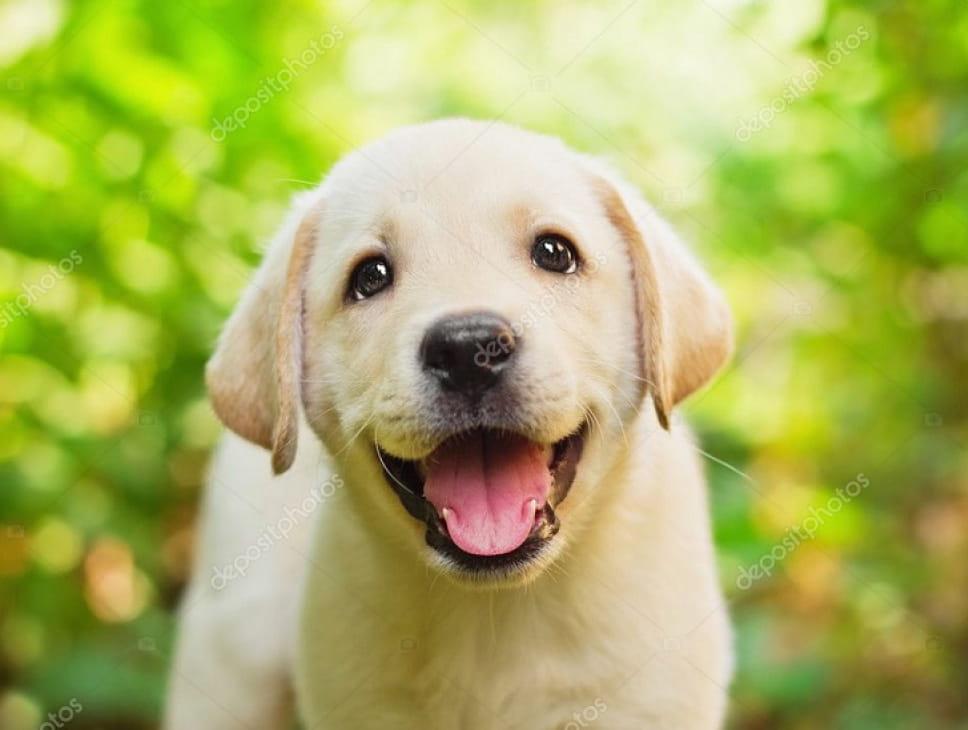 SALON DE LA PROTECTION ANIMALE