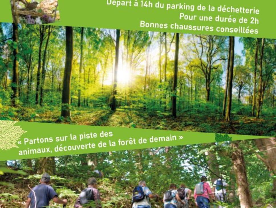 BALADE DÉCOUVERTE DE L'ÉCOSYSTÈME FORESTIER
