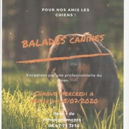 BALADE CANINE AUTOUR DU BALLON D'ALSACE